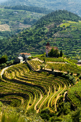 Vineyard Hill in Portugal