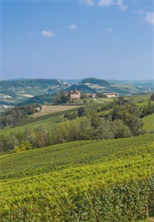 Italian Vineyard producing Asti Wine