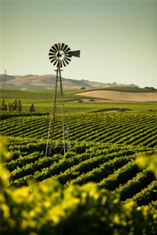 California vineyard rolling hills landscape in dark sunlight with a windmill