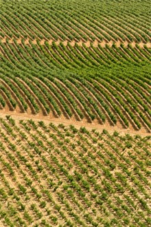 Vineyard in Spain aerial view