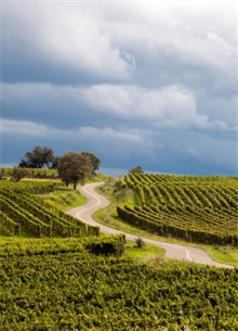 Winding Road among French Vineyard fields under dark cloudy sky