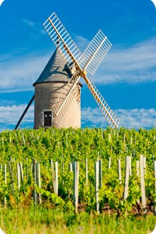 Burgundy vineyard with windmill and blue sky background