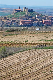 Vineyard in Catalonia to produce Cava