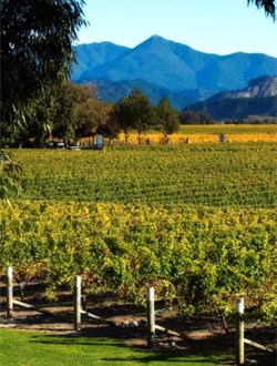 NZ Marlborough Wines